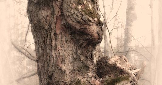 Pine The Kikimora