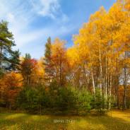 The eluding Golden Autumn