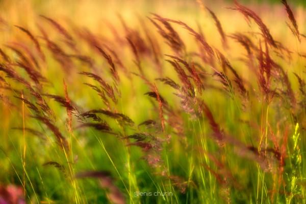 August Herbs