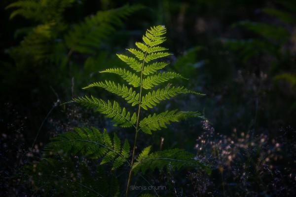 Delicate Light